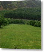 Lakeland Meadow  Metal Print