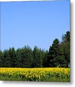 Land Of Sunflowers Metal Print