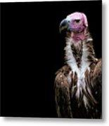 Lappet-faced Vulture - Africa - African Vulture - Nubian Vulture Metal Print