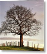 Large Tree Metal Print by Jon Baxter