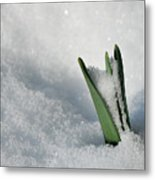 Late Snow Metal Print