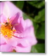 Lavendar Rose With Bee Metal Print