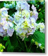 Lavender Hydrangea In Garden Metal Print