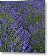 Lavender In Sequim Metal Print