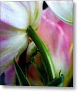 Layers Of Tulips Metal Print
