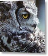 Lazy Owl Metal Print