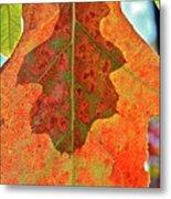 Leaf Behind Metal Print
