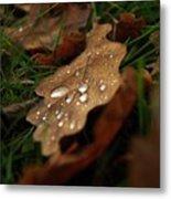 Leaf In Autumn. Metal Print