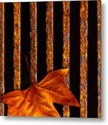 Leaf In Drain Metal Print by Carlos Caetano