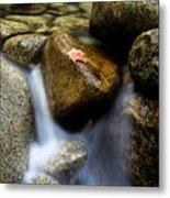 Leaf On Rock-yosemite Valley Metal Print