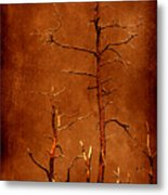 Left Bare And Broken Metal Print