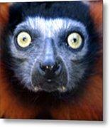 Lemur Glare Metal Print