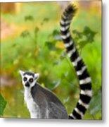 Lemur Lemur Metal Print