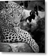 Leopard Metal Print by Cesar March