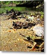 Leopard Frog Landing Metal Print