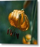 Leopard Lilly Metal Print
