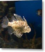 Light Fish Metal Print