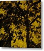 Lighttthru Forest Metal Print