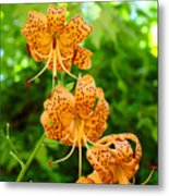 Lilies Art Tiger Lily Flowers Canvas Prints Floral Baslee Troutman Metal Print