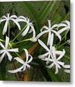 Lilies Of The Swamp Metal Print