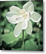 Lilies Of The Water Ivb Metal Print