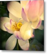 Lilies Of The Water Vib Metal Print