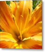 Lilies Orange Yellow Lily Flower 1 Giclee Art Prints Baslee Troutman Metal Print