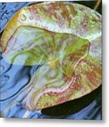 Lily Pad On The Pond Metal Print
