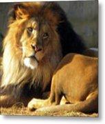 Lion 2 Washington D.c. National Zoo Metal Print