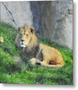 Lion At Leisure Metal Print