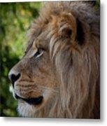 Lion Portrait Of A Leader Metal Print