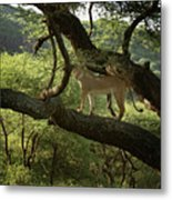 Lions Do Fly Metal Print