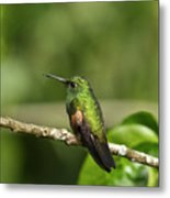 Little Hummingbird Metal Print