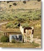 Llama Land Metal Print