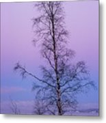 Lone Tree At Winter Sunset Metal Print