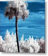 Lonesome Palm Metal Print by Bob Pomeroy