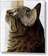 Look Out Window Tabby Cat Metal Print