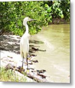 Looking For Lunch Gp Metal Print