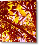Looking Through Tree Leaves 2 Metal Print