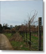 Los Olivos Vineyard Metal Print