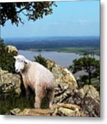 Lost Sheep Metal Print
