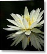 Lotus And Reflection Metal Print