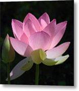 Lotus Bud--snuggle Bud Dl005 Metal Print by Gerry Gantt