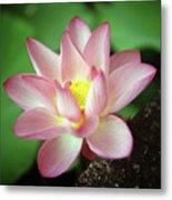 Lotus Flower Metal Print by Yoshika Sakai