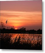 Louisiana Rice Field At Sunset Metal Print