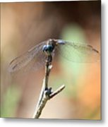 Lovely Dragonfly Metal Print