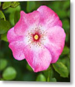 Lovely Pink Rose Metal Print