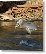 Lunch On The Neuse River Metal Print