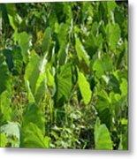 Lush Crop Leaves In A Field Metal Print