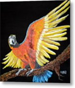 Macaw - Wingin' It Metal Print